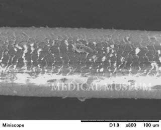 20150313電子顕微鏡01.jpg