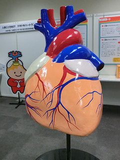 アゴラ中09巨大心臓.jpg
