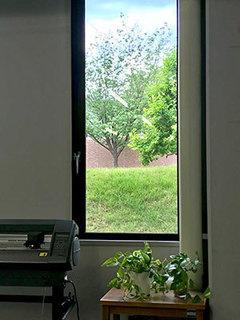 窓からの緑.jpg