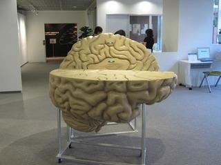 脳模型2.jpg
