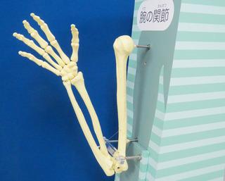 腕関節.jpg